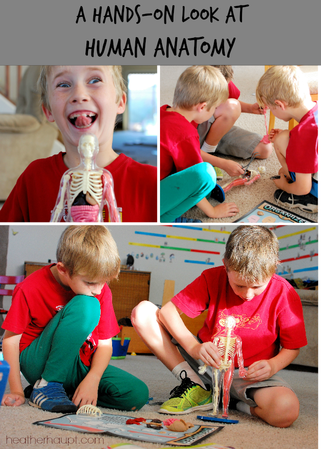 This engaging human body model is a powerful way to pull kids into a study of human anatomy.